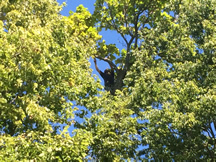 tn-tree-care-selective-pruning