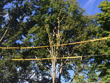 tn-tree-removal-power-line