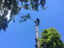 tn-tree-removal