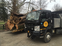 tn-tree-removals