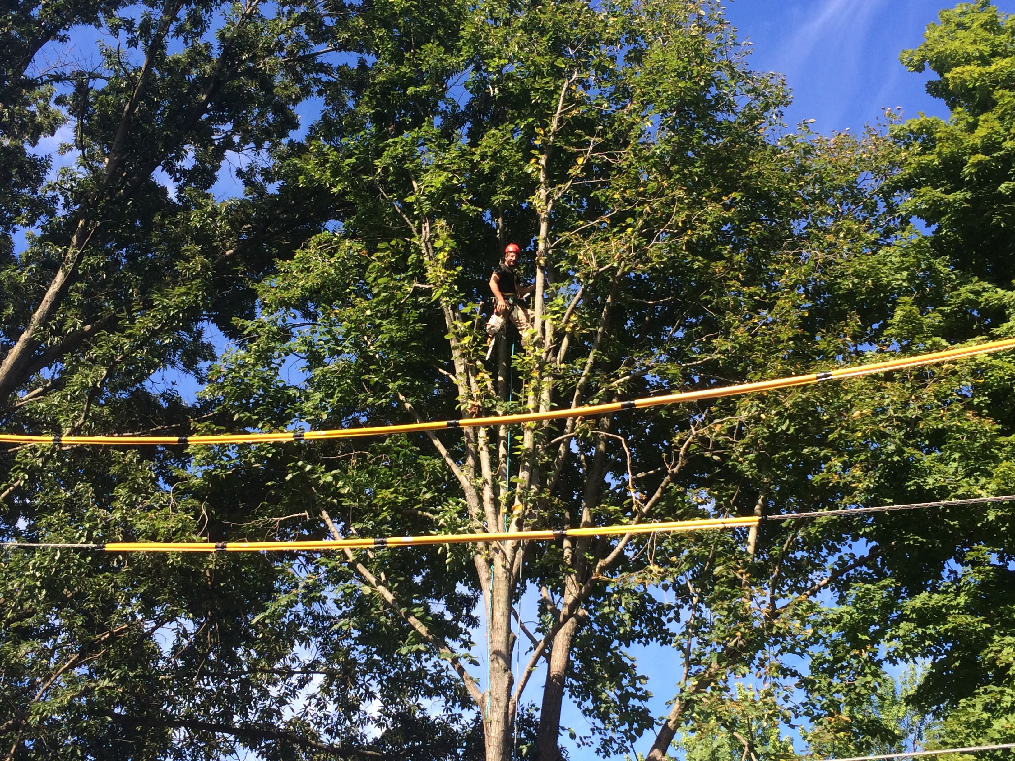 Tree removal done with power line wraps